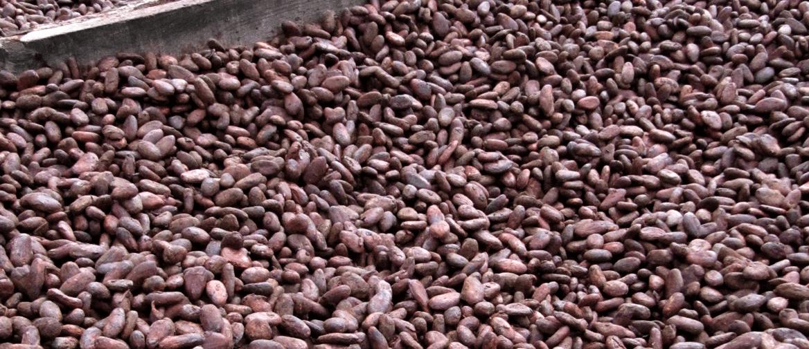 Cacaobonen, rauw